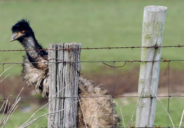 ostrich-1-010908blog.jpg
