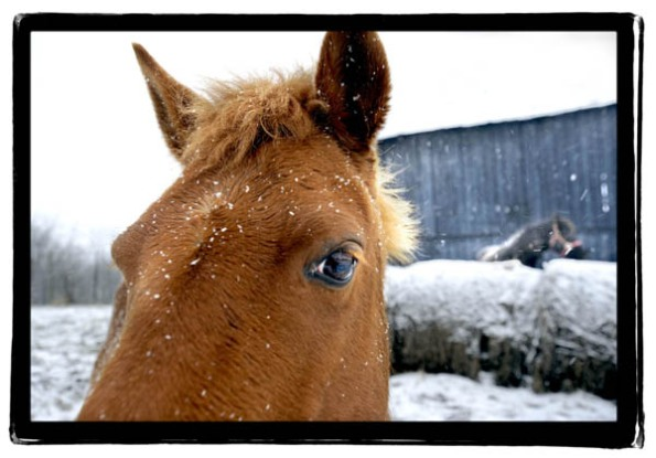 horse021408blog.jpg