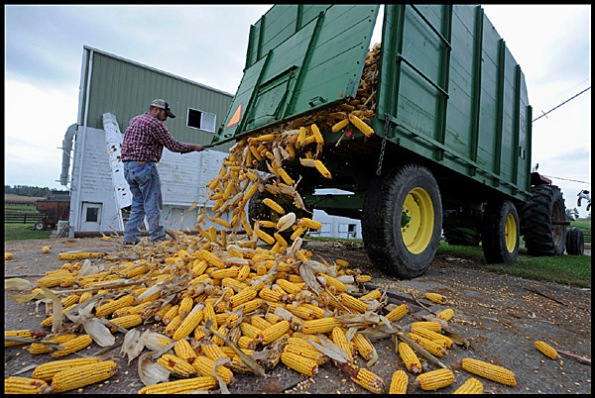 corn 4 blog 101309