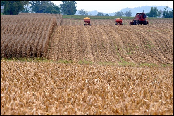 corn 5 blog 101309
